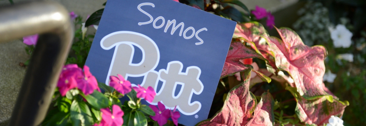 Somos Pitt sign among flowers