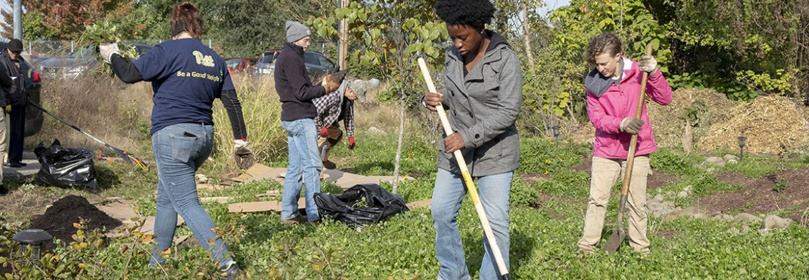four people cleaning up garden plot