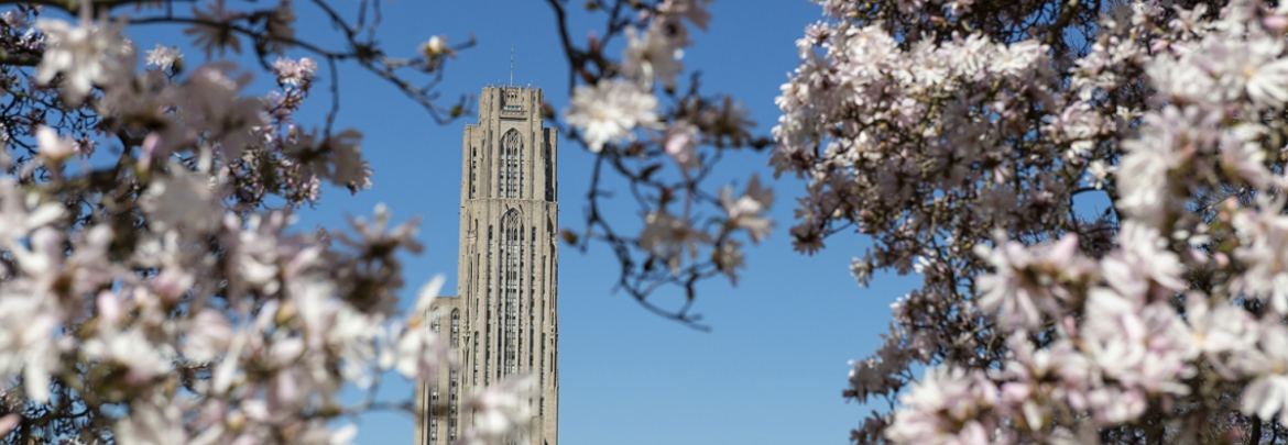 cathedral of learning viewed through flowering branches